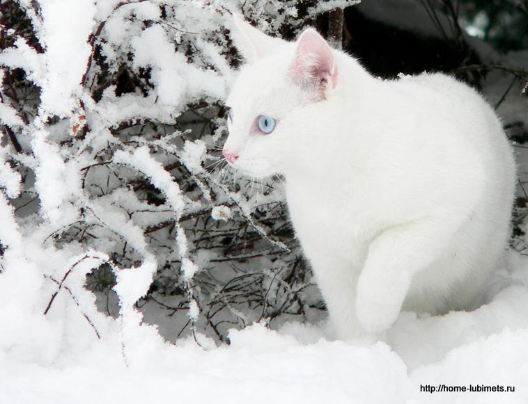 Кошка - снежинка