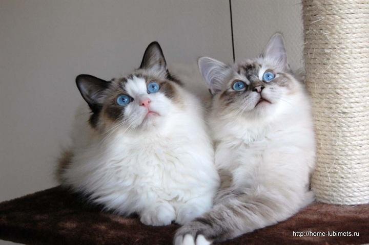 Кошки в Америке