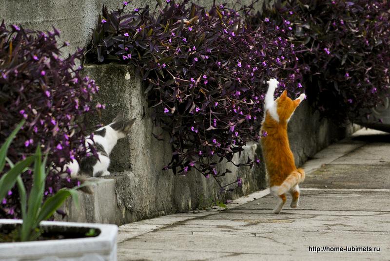 Кот и хвост