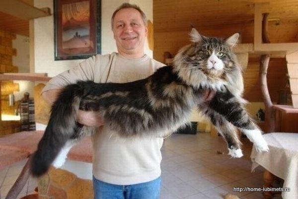Кот в деревне