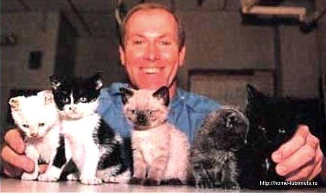 Спасённые котята