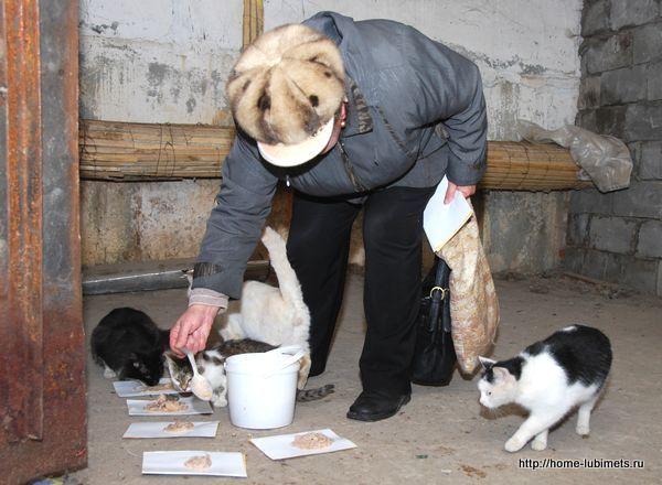 Бездомные кошки