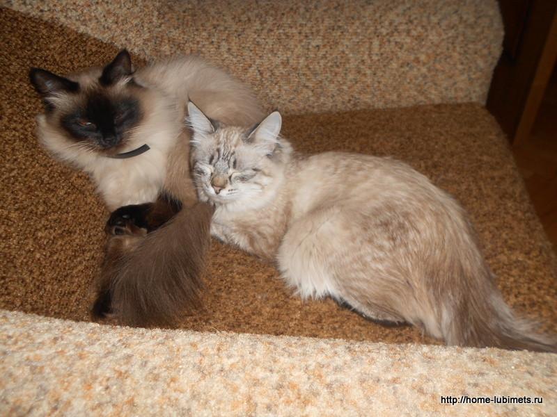 Общение кошек