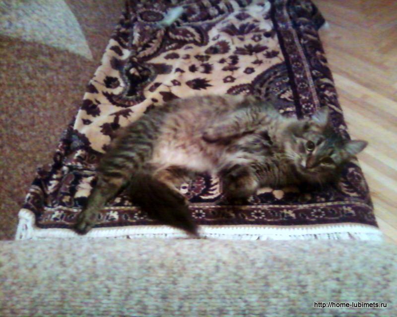 Кошка Дуся