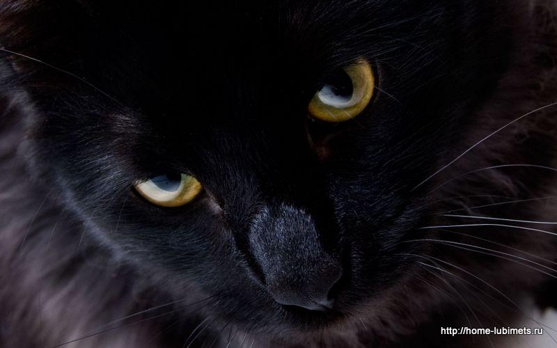 Кот Котя
