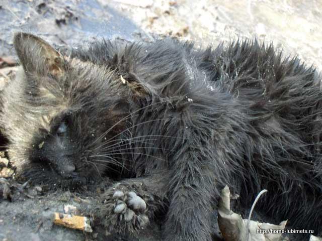 Котёнок умер
