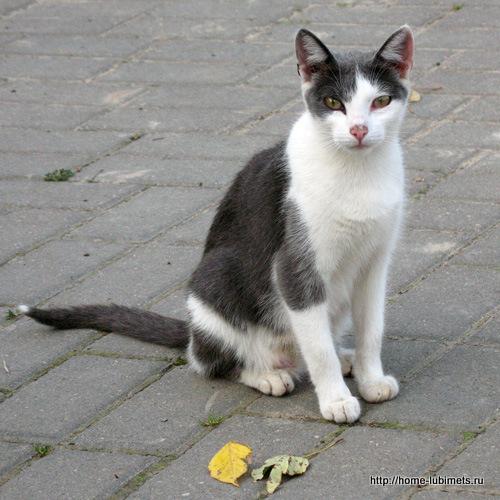 Одинокий бездомный кот