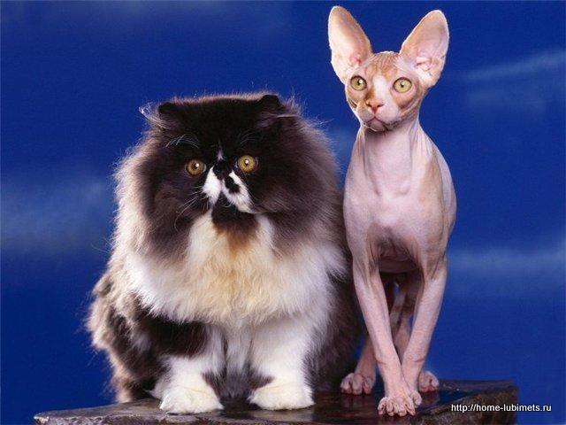 Сфинкс и Мурка