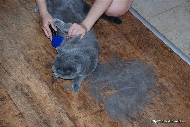 У кота шерсть сбилась