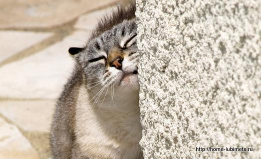 Кошачьи метки