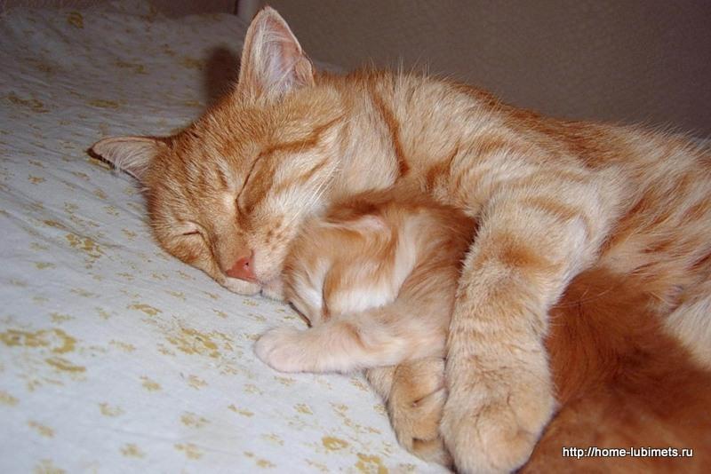 Кошка - мама