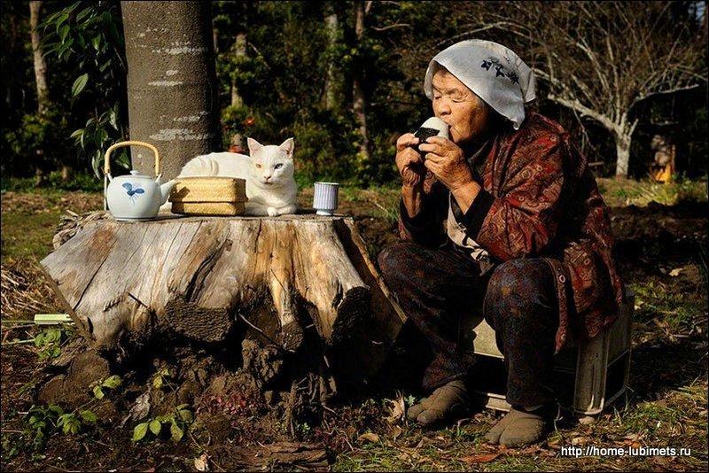 Кот и старушка