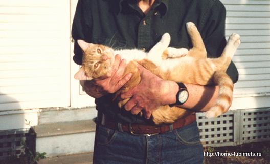 Лейкоз кошек