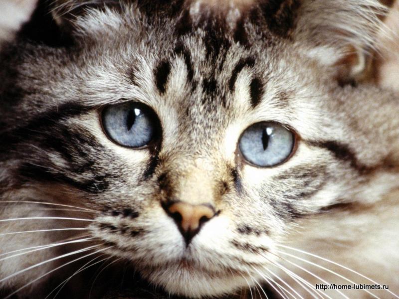 Несчастная кошка