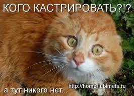 питание кастрированного кота