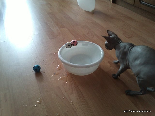 Кошки и жара
