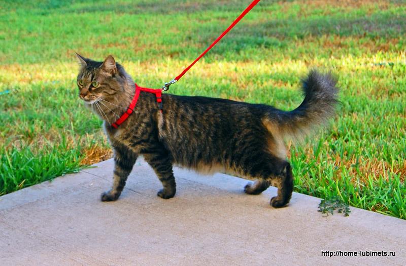 Кошки и улица