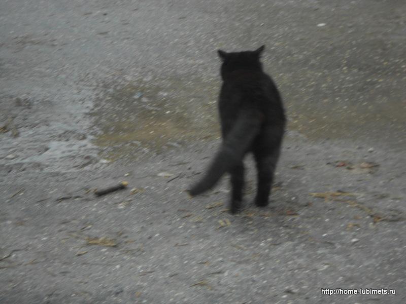 Кот бездомный