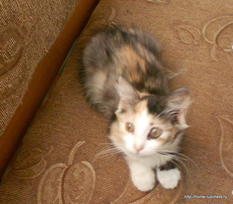 Эпилепсия у кошки