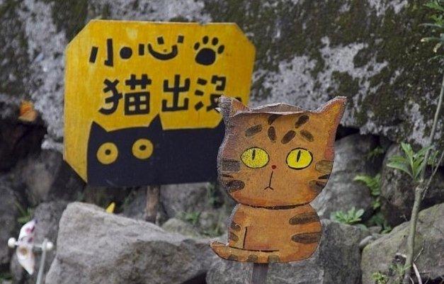 Кошки Хоутонга