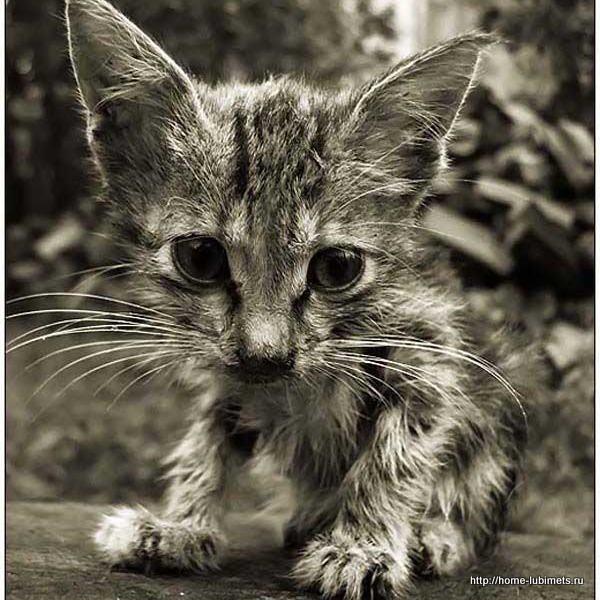 Бездомный котёнок