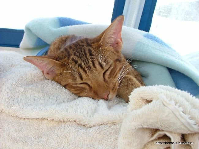 Язвенная болезнь у кошек