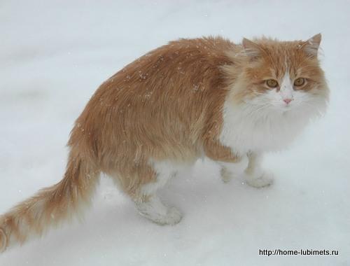 Брошенная кошка