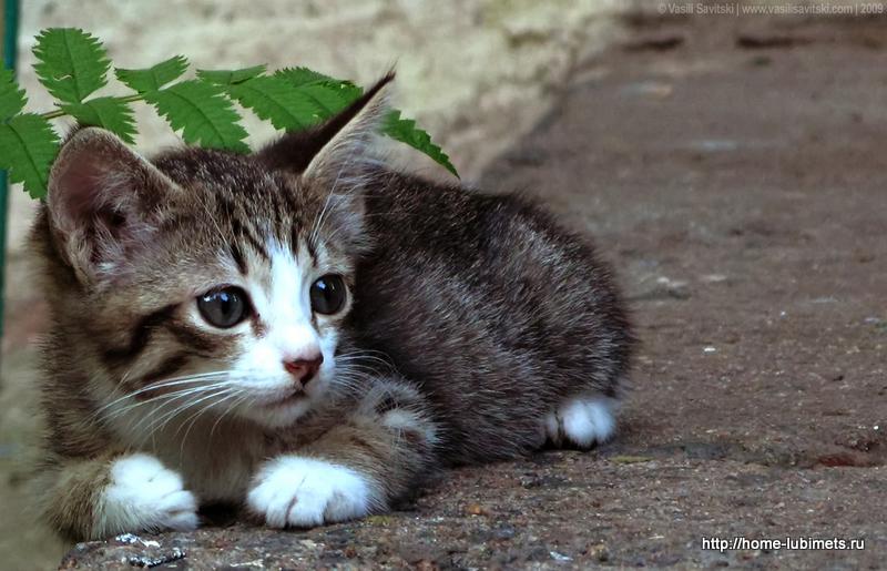 Брошенный котёнок