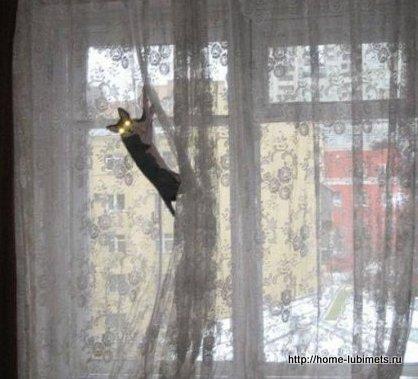 Кот и штора