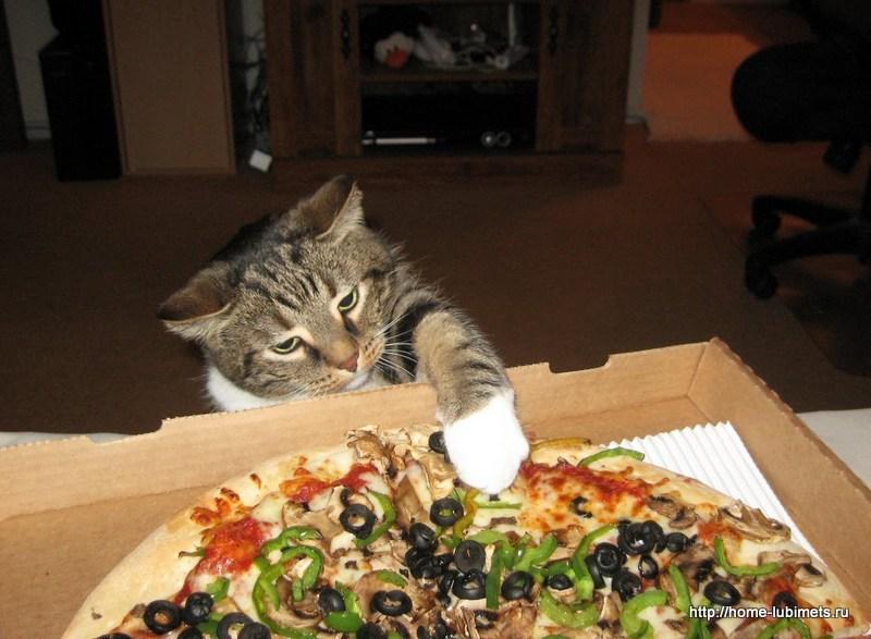 Воспитание кота