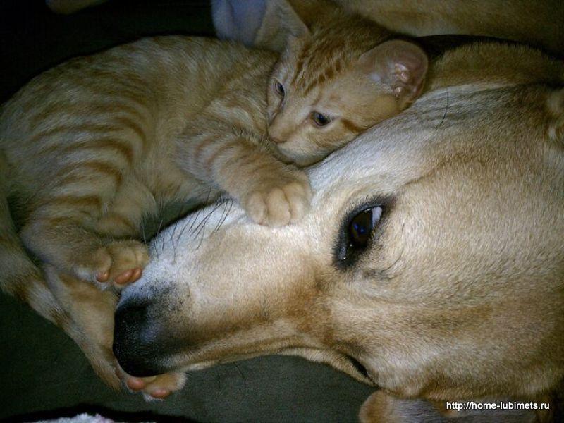 Котёнок и собака
