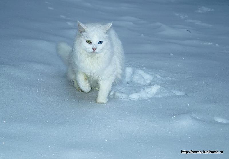 Кошка - зима