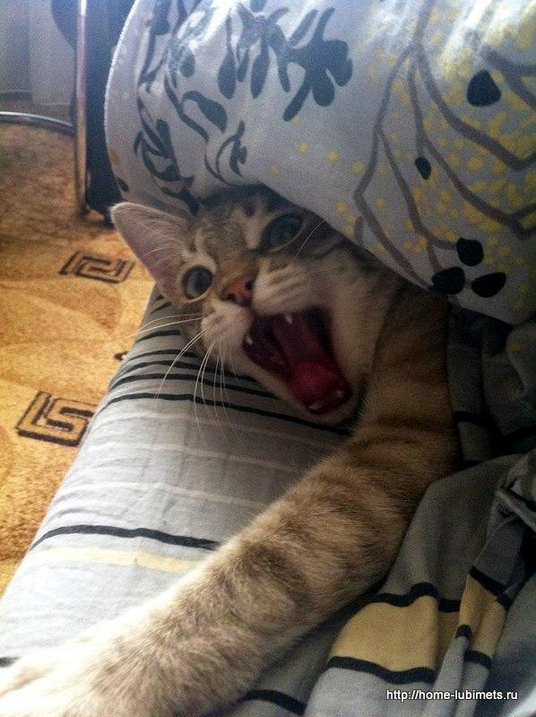 Заведи кота