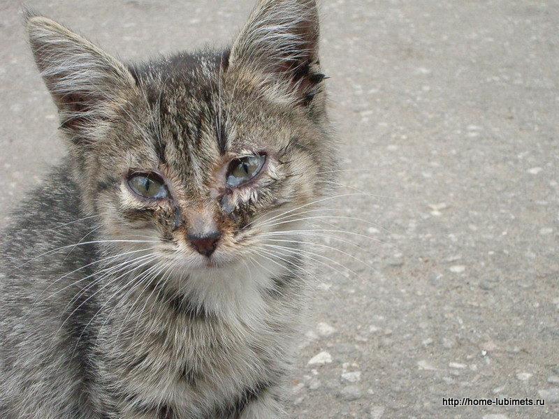 Брошенные кошки