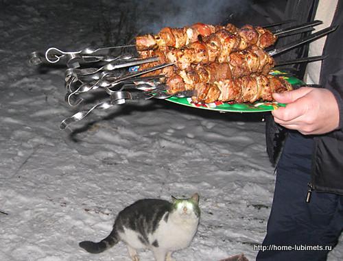 Кот и мясо