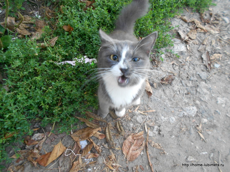 Возьмите лучше кошку из приюта