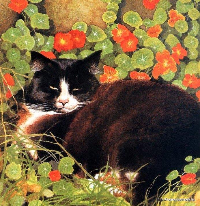 Крисси Снеллинг. Кот