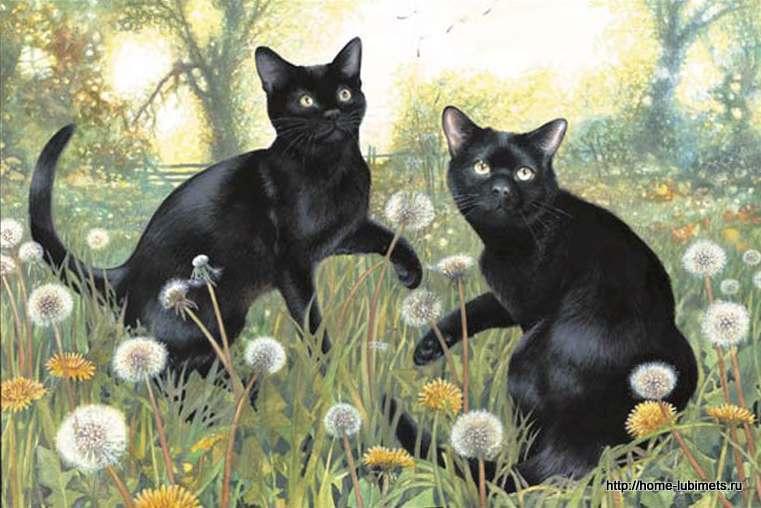 Крисси Снеллинг. Черные кошки