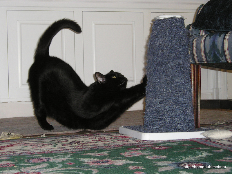 Кот и когтеточка
