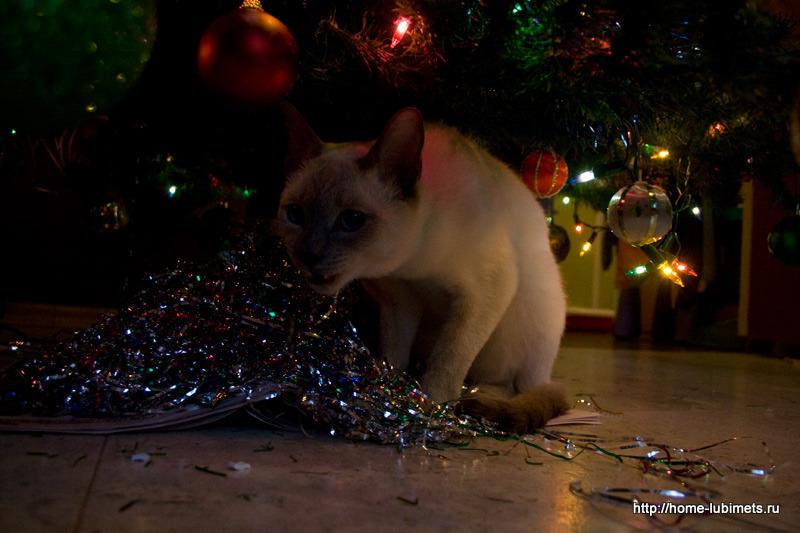 Кошки и новый год