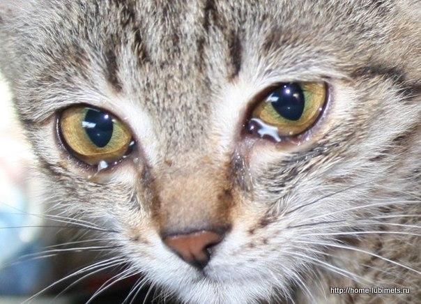 Котёнок в колодце