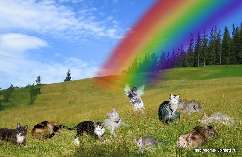 Кошки на радуге