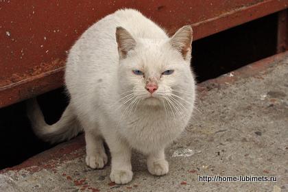 Брошенный кот