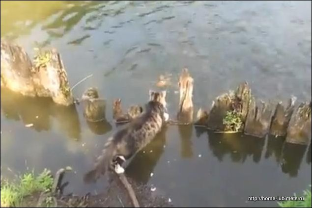 Кот - рыболов