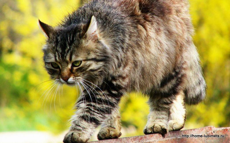 В каждой кошке сидит неудавшийся лев