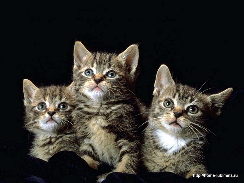 Коты - хранители