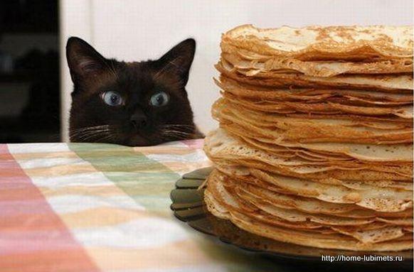 Еда кошек