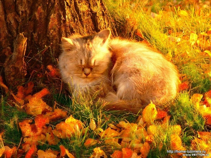 Кошка - осень