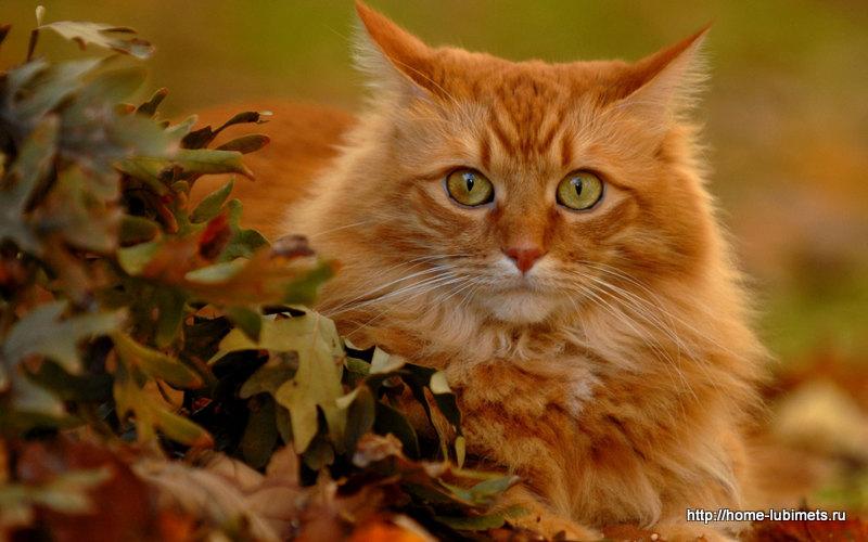 я люблю ужасно кошек