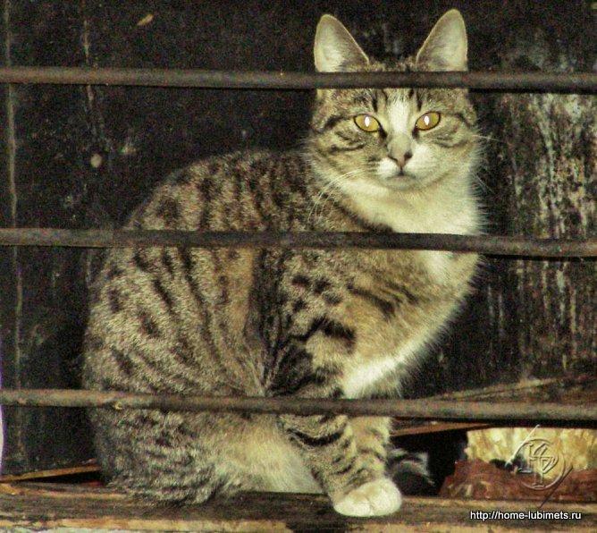 Кошка в подвале